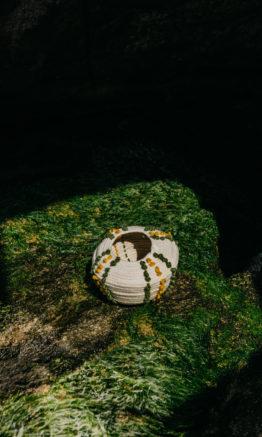 erizo de mar linea rocha